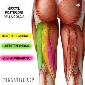 5 posizioni yoga per allungare il bicipite femorale for Muscolo interno coscia nome