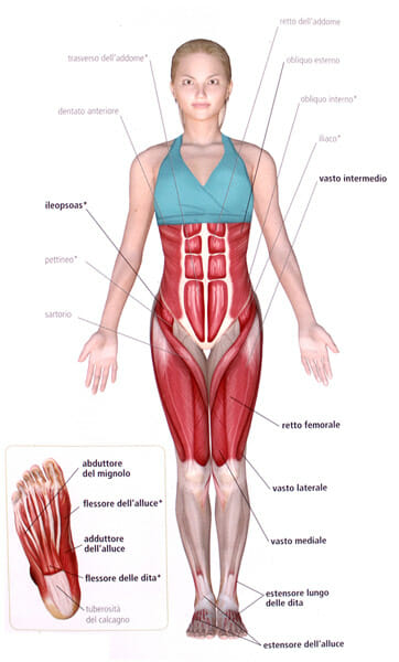 Anatomia-tadasana
